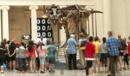 Chicago Museum Week Field Museum