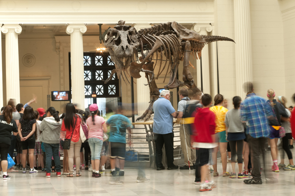 Fun family activities to do with kids in chicago attractions events chicago museum week field museum fandeluxe Images