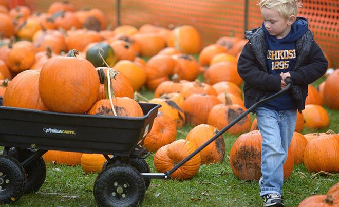 Fall Fun & Pumpkin Patches