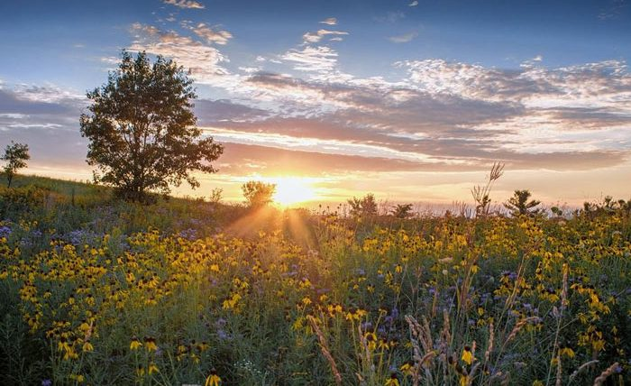 Connect with nature at DuPage Forest Preserves
